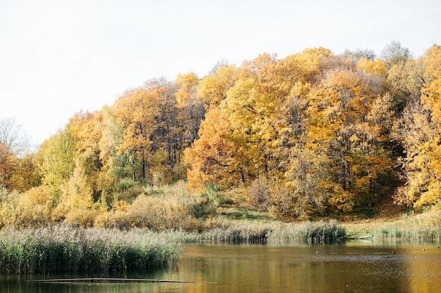 Lago nella foresta di autunno nella luce morbida del tramonto bellissimo autunno soleggiato