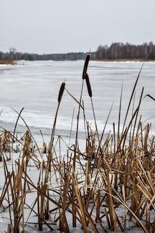 Il lago è coperto di ghiaccio in inverno