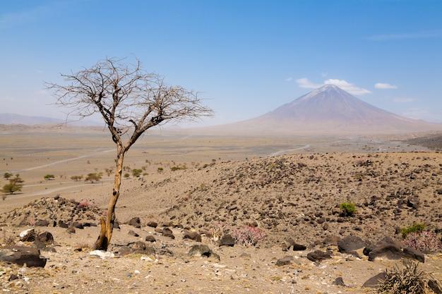 Paesaggio della zona del lago natron, tanzania, africa. il vulcano ol doinyo lengai. montagna di dio. panorama africano