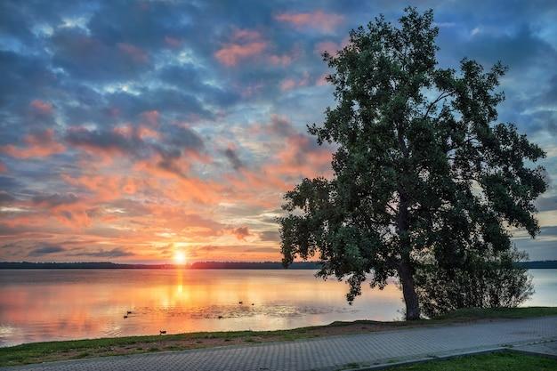 Lago valdai all'inizio dell'estate mattina con un bel cielo rosa e un albero sulla riva