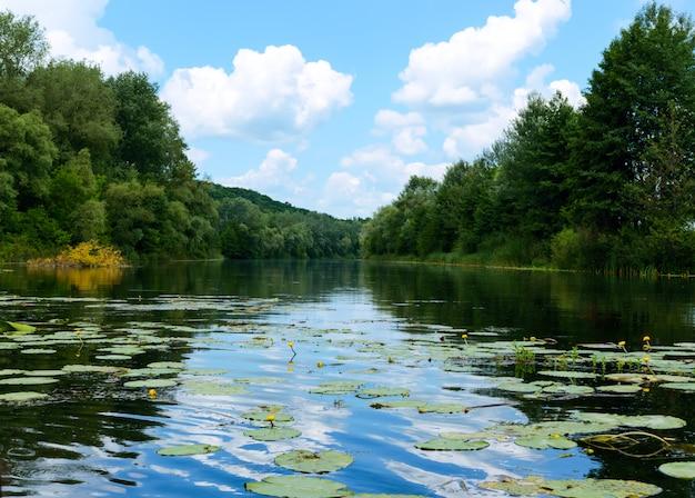 Vista lago. sulle rive della fitta foresta verde