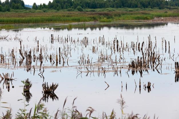 Un lago con diverse piante e tronchi d'albero in estate, un lago con tempo nuvoloso