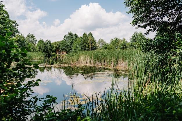Lago con alberi di primavera.