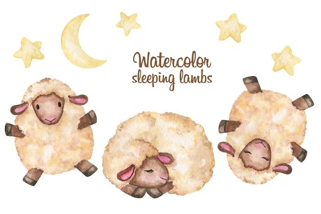 Acquerello di clipart di agnello, set di pecore carino bambino, illustrazione di stampa disegnata a mano su fondo bianco
