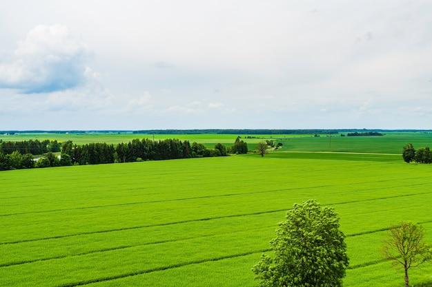 Il paesaggio del campo agricolo, sullo sfondo, il cielo azzurro e la foresta.