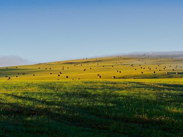 Paesaggio bellissimo campo con mucchi di fieno al mattino presto nel caucaso settentrionale