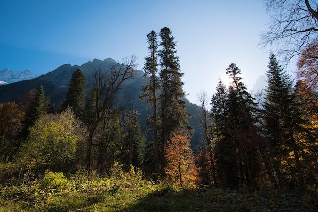Abbellisca le belle montagne con la foresta e i pini e il cielo blu con i raggi del sole e le luci nel caucaso nel villaggio di dombay della russia