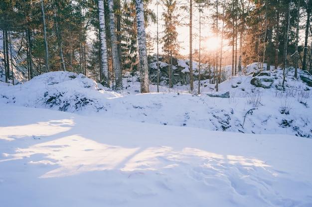 Paesaggio di una bella foresta invernale. bagliore del sole al tramonto tra gli alberi