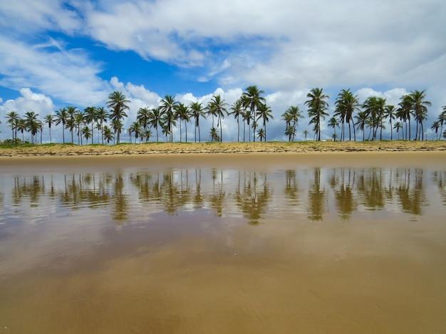 Paesaggio di alberi di cocco sulla spiaggia di barra do coqueiros