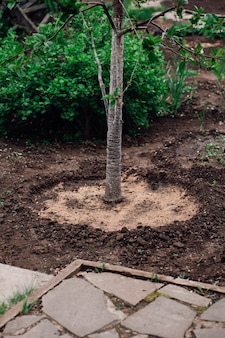 Progettazione del paesaggio di un giovane albero con un foro rotondo per l'irrigazione e la protezione dalle erbacce in giardino