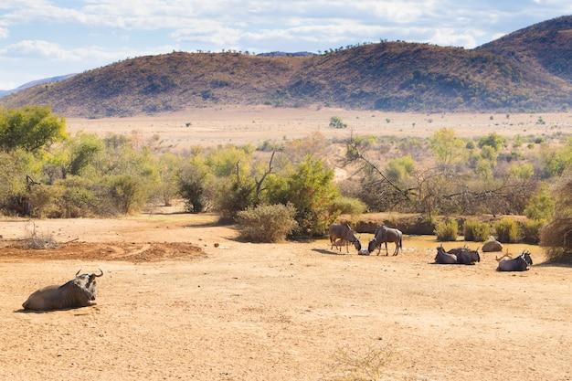 Paesaggio dal parco nazionale di pilanesberg, sud africa. fauna e natura. safari africano