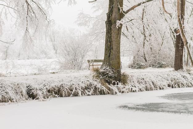 Paesaggio di un lago ghiacciato in inverno in una foresta con alberi e neve. con copia spazio bianco.
