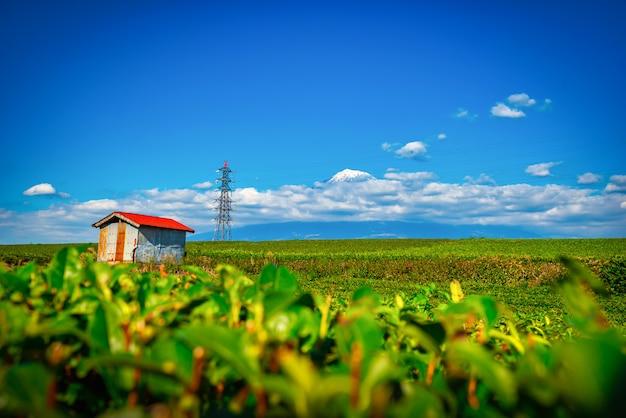 Immagine del paesaggio del monte. fuji e il campo di tè verde con il padiglione di giorno a shizuoka, in giappone.