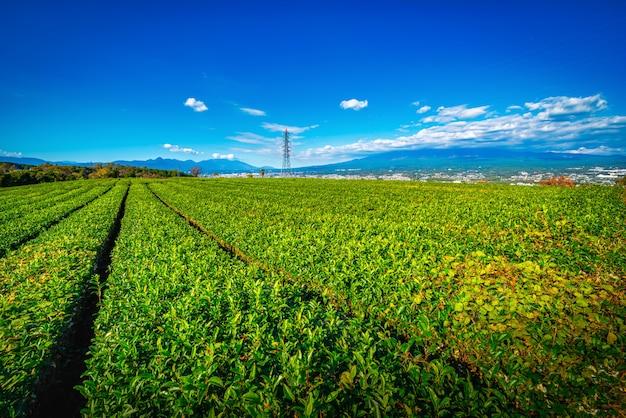 Immagine del paesaggio del monte. fuji con il campo di tè verde di giorno a shizuoka, in giappone.