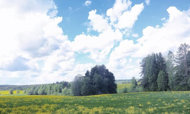 Il paesaggio è estate. alberi verdi ed erba in un paesaggio di campagna. giornata estiva della natura. foglie sui cespugli.