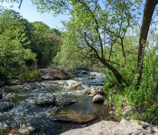 Paesaggio del ruscello di montagna nella foresta in ucraina