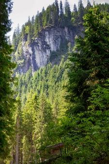 Paesaggio di montagne e foreste