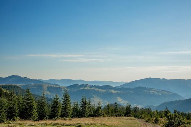 Paesaggio di montagna con alberi verdi