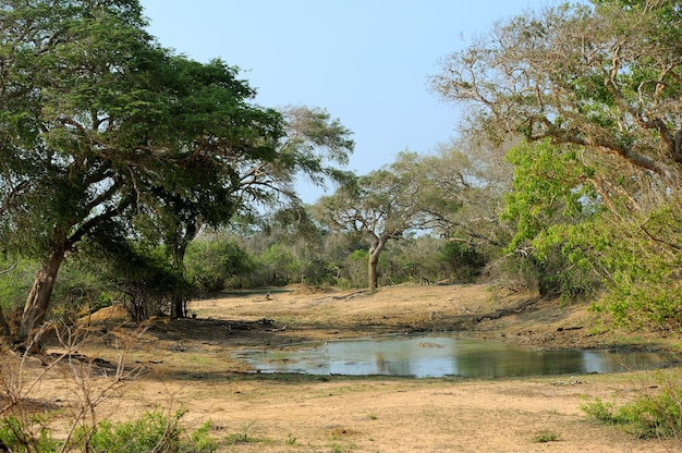 Paesaggio sul parco nazionale dell'isola dello sri lanka
