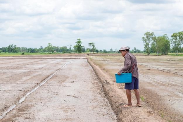 Il paesaggio del vecchio uomo contadino asiatico sta lanciando la risaia delle piantine in un campo di riso.