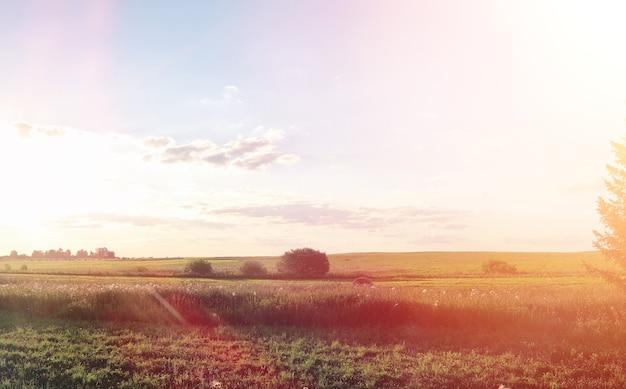 Paesaggio fuori città. campo erboso e cielo azzurro. tramonto sul campo del villaggio