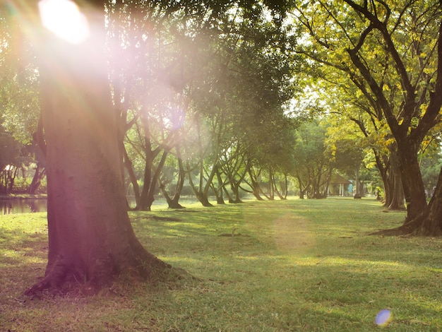 Abbellisca la foto della via fra gli alberi verdi della foglia