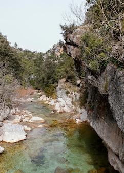 Paesaggio del fiume nella foresta