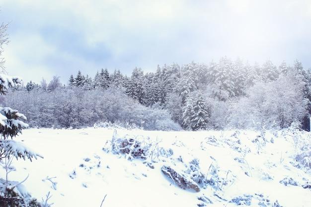 Paesaggio strada nella foresta invernale con natura selvaggia innevata