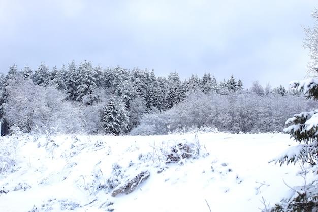 Strada del paesaggio nella foresta invernale con la natura selvaggia innevata