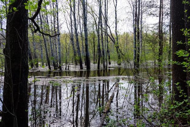 Paesaggio - foresta primaverile allagata durante l'acqua alta