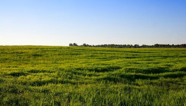 Paesaggio estivo con vegetazione erbosa verde, che viene utilizzata come pascolo per il bestiame in azienda