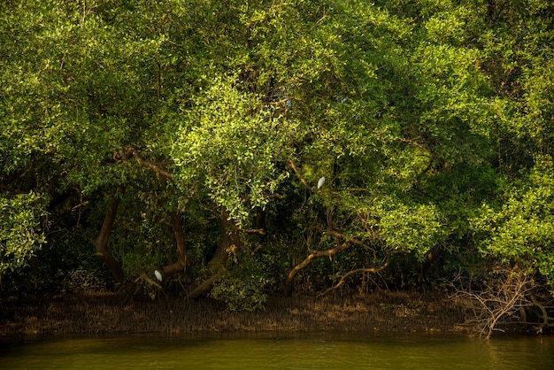 Vista del paesaggio di lagune con alberi di cocco e foresta di mangrovie a goa, india.