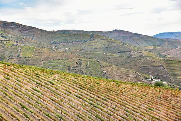 Paesaggio di vigneti nelle montagne del portogallo in estate