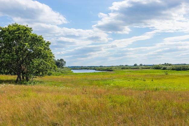 Paesaggio prato selvaggio, campo con fiori sotto il cielo blu.