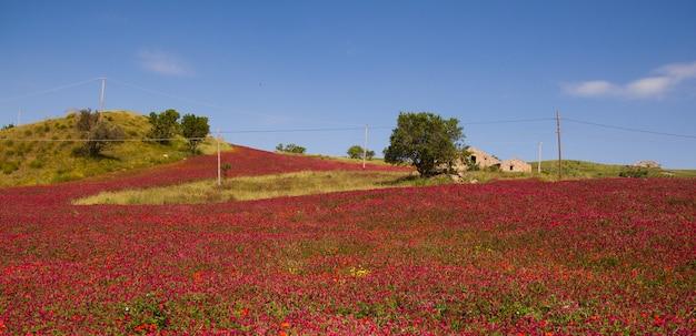 Paesaggio con bellissima natura in sicilia, italia.