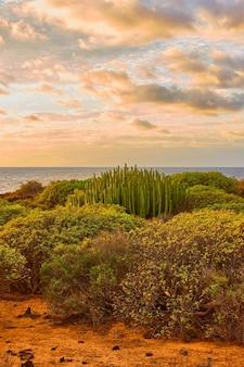 Paesaggio con cespugli e cactus vicino all'oceano atlantico a tenerife al tramonto, isole canarie