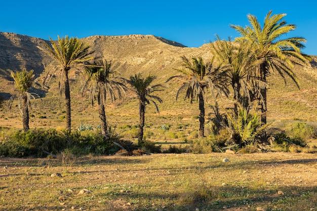 Paesaggio con palme vicino a rodalquilar. spagna.