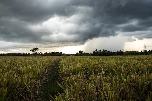 Paesaggio con un campo di riso e un cielo drammatico