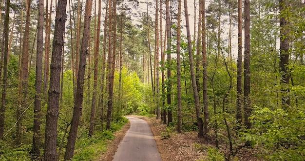 Paesaggio con sentiero corsia pedonale e alberi verdi nella foresta. bellissimo vicolo nel parco per passeggiate a piedi e in bicicletta in una giornata di sole estivo.