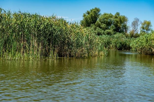 Paesaggio con linea di galleggiamento, uccelli, canne e vegetazione nel delta del danubio, romania, 2021
