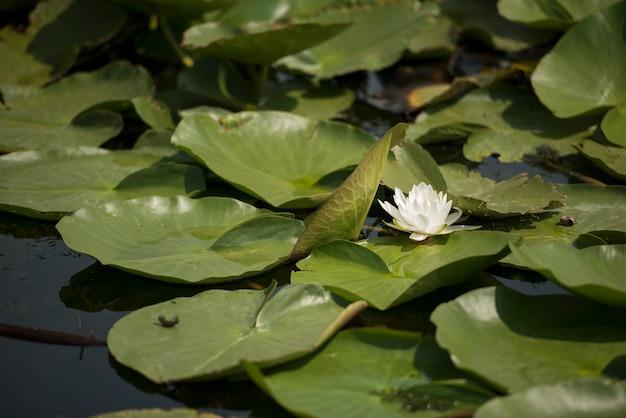 Paesaggio con linea di galleggiamento, uccelli, canne e vegetazione nel delta del danubio