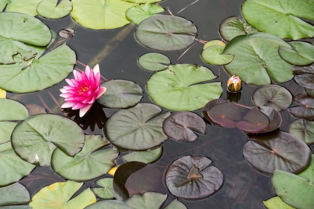 Paesaggio con linea di galleggiamento, uccelli, canne e vegetazione