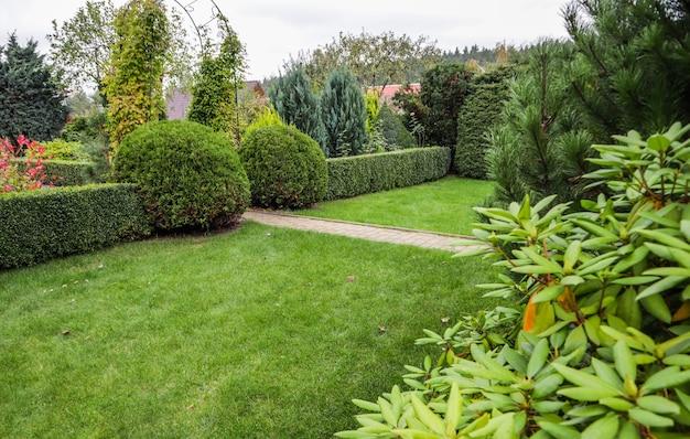 Abbellimento di un giardino con piante sempreverdi decorative di arbusti colorati di prato verde brillante e