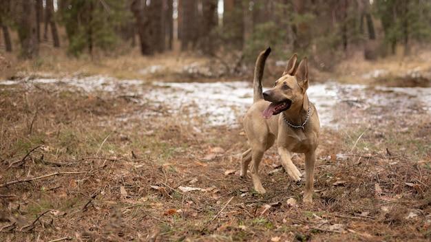 Un grosso cane cammina nella foresta.
