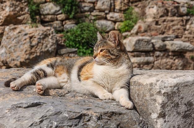 Grande gatto grasso tra le rovine di un'antica città in turchia