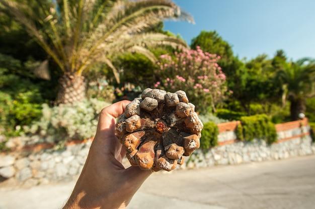 Grande grumo in mano sullo sfondo di palme e vegetazione in una giornata di sole in vacanza