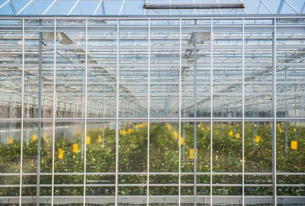Grande parete di vetro appannata della serra con fiori