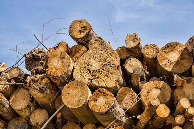 Un gran numero di tronco di albero solido, primo piano dal luogo di raccolta del legno, da vicino