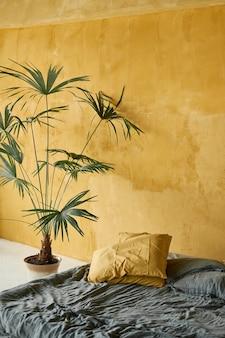 Grandi piante all'interno. una grande palma in una pentola contro il tavolo di un muro dipinto di giallo scuro. .