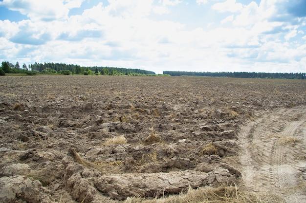 Un grande campo arato dopo il grano. in lontananza puoi vedere la foresta